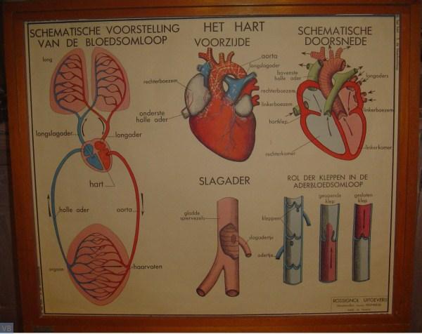 6 - het hart